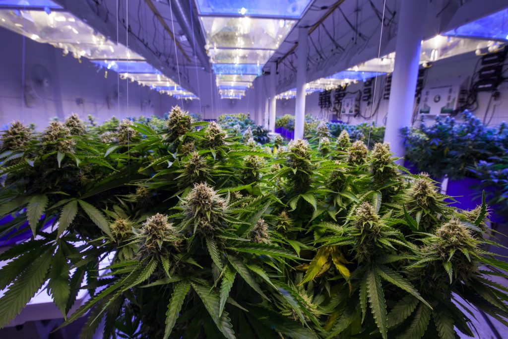 Ontario Licensed Producers